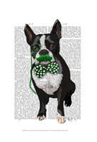 Boston Terrier With Green Moustache And Spotty Green Bow Tie Framed Print