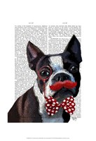 Boston Terrier Portrait with Red Bow Tie and Moustache Framed Print