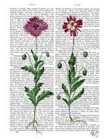 Italian Carnation 3 Framed Print