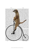 Meerkat on Black Penny Farthing Framed Print
