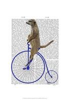 Meerkat On Blue Penny Farthing Framed Print