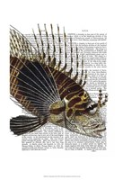 Vintage Spiky Fish Framed Print