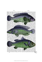 Blue and Green Fish Trio Framed Print