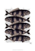 Five Striped Fish Framed Print