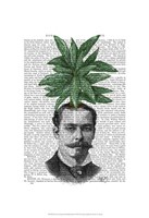 Chinese Evergreen Head Plant Head Framed Print