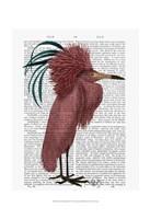 Crested Marsala Bird Framed Print