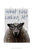 What Ewe Looking At Framed Print