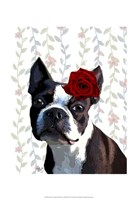 Boston Terrier with Rose on Head Framed Print