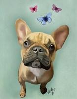 Brown French Bulldog and Butterflies Fine Art Print