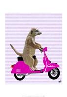 Meerkat on Pink Moped Framed Print