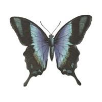 Butterfly Botanical I Framed Print