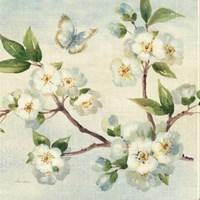 Cherry Bloom I Framed Print