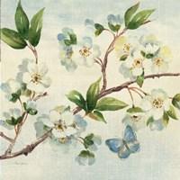 Cherry Bloom II Framed Print