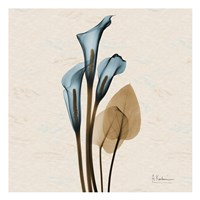 Calla Lily Blue Brown H36 Fine Art Print