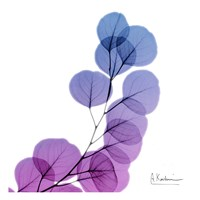 Eucalyptus In Purple Fine Art Print