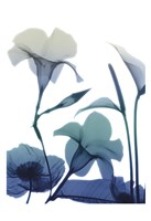 Morning Bloom 1 Fine Art Print