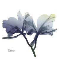 Midnight Orchid 1 Fine Art Print