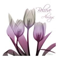 Ombre Tulips Fine Art Print