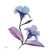 Mandelilla Purple 2 Fine Art Print