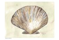 Sea Shells Neutral 2 Fine Art Print