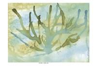 Seafoam Coral I Framed Print