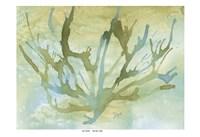 Seafoam Coral II Framed Print
