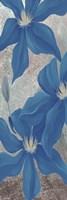 Blue Clematis Cavees I Framed Print