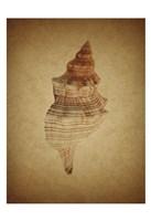 Sepia Shell 8 Framed Print