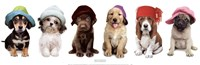 Hat Hounds Fine Art Print