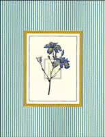 Botanical XIII Fine Art Print