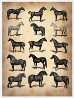 Vintage Horses Collection Fine Art Print