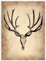 Vintage Deer Scull Fine Art Print