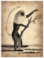 Vintage Monkey Fine Art Print
