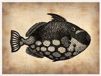 Vintage Fish Fine Art Print