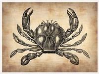 Vintage Crab Fine Art Print