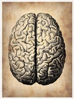 Vintage Brain Fine Art Print