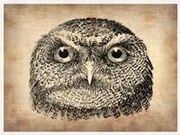 Vintage Owl Face Fine Art Print