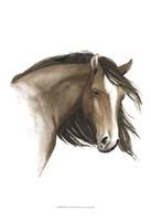 Wild Horse I Fine Art Print