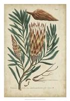 Weinmann Foliage & Fruit III Fine Art Print