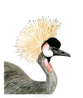 Watercolor Crested Crane Framed Print
