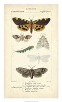 Antique Butterfly Study I Framed Print