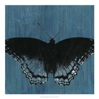 Chambray Butterflies II Framed Print
