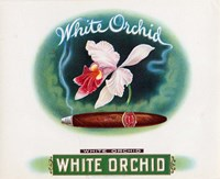 White Orchid Fine Art Print