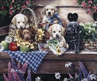 Five Puppies Fine Art Print