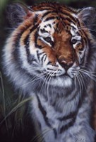 Tiger In The Midst Fine Art Print
