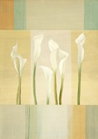 Calla Lily Dance I Framed Print