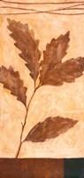 Foliage 2 Framed Print