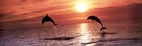 Sunset Dolphins Fine Art Print