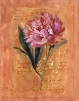 Botanical III Framed Print