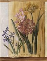 Floral Postcard I Framed Print